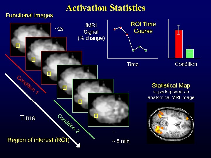 Activation Statistics Functional images ROI Time Course f. MRI Signal (% change) ~2 s