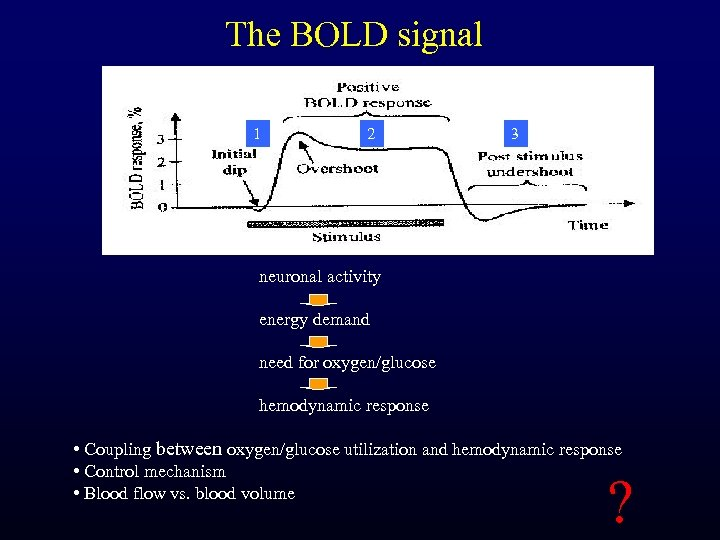 The BOLD signal 1 2 3 neuronal activity energy demand need for oxygen/glucose hemodynamic