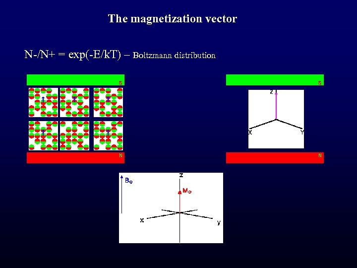 The magnetization vector N-/N+ = exp(-E/k. T) – Boltzmann distribution