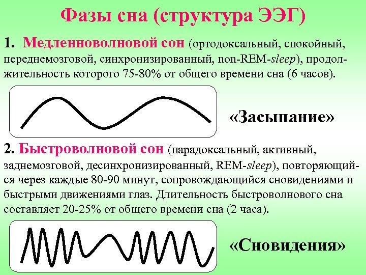 Фазы сна (структура ЭЭГ) 1. Медленноволновой сон (ортодоксальный, спокойный, переднемозговой, синхронизированный, non-REM-sleep), продолжительность которого