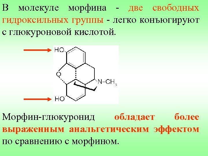 В молекуле морфина - две свободных гидроксильных группы - легко конъюгируют с глюкуроновой кислотой.
