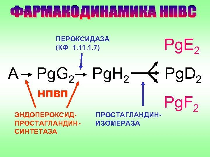 ПЕРОКСИДАЗА (КФ 1. 1. 7) А Pg. G 2 Pg. H 2 НПВП ЭНДОПЕРОКСИДПРОСТАГЛАНДИНСИНТЕТАЗА