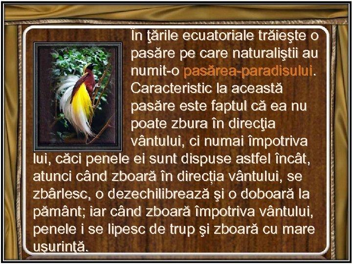În ţările ecuatoriale trăieşte o pasăre pe care naturaliştii au numit-o pasărea-paradisului. Caracteristic