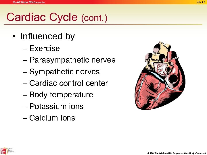 23 -17 Cardiac Cycle (cont. ) • Influenced by – Exercise – Parasympathetic nerves