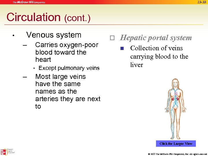23 -33 Circulation (cont. ) • Venous system – Carries oxygen-poor blood toward the