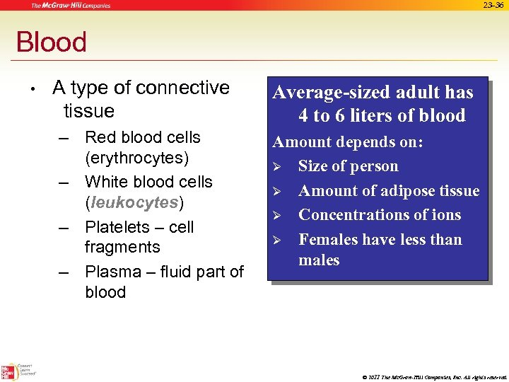 23 -36 Blood • A type of connective tissue – Red blood cells (erythrocytes)