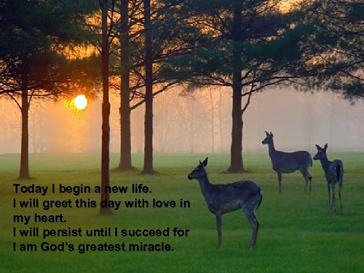 Today I begin a new life. I will greet this day with love in