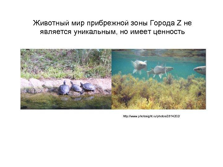Животный мир прибрежной зоны Города Z не является уникальным, но имеет ценность http: //www.