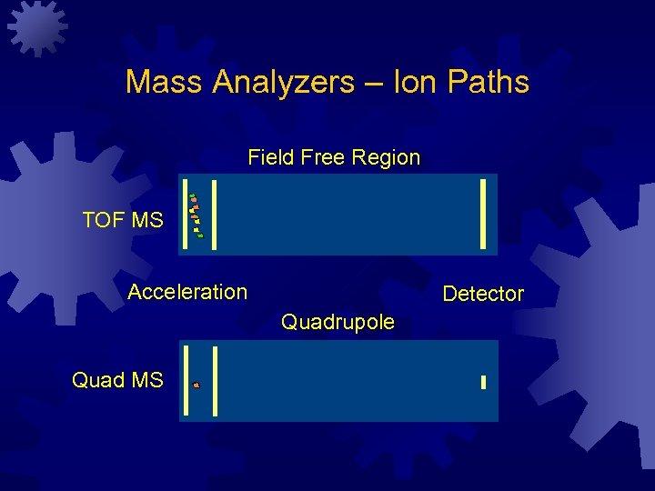 Mass Analyzers – Ion Paths Field Free Region TOF MS Acceleration Detector Quadrupole Quad