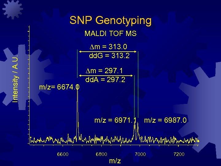 SNP Genotyping Intensity / A. U. MALDI TOF MS Dm = 313. 0 dd.