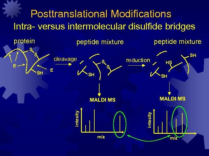 Posttranslational Modifications Intra- versus intermolecular disulfide bridges protein peptide mixture S SH reduction S