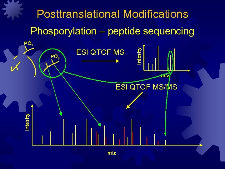 Posttranslational Modifications Phosporylation – peptide sequencing PO 3 ESI QTOF MS intesity PO 3