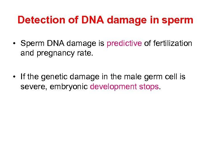 Detection of DNA damage in sperm • Sperm DNA damage is predictive of fertilization