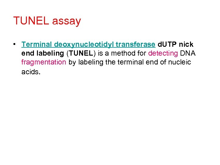 TUNEL assay • Terminal deoxynucleotidyl transferase d. UTP nick end labeling (TUNEL) is a