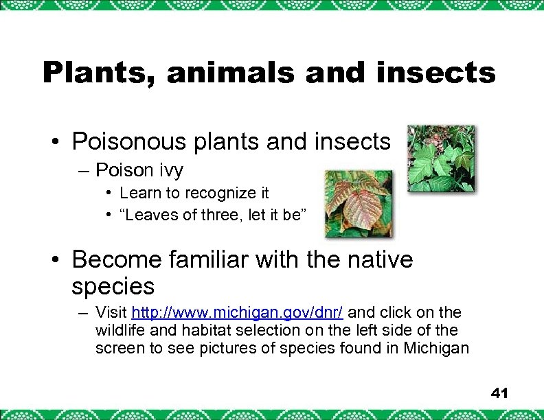 Plants, animals and insects • Poisonous plants and insects – Poison ivy • Learn