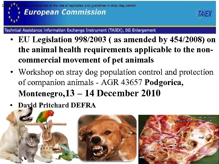Differing European approaches to the role of legislation and guidelines in stray dog control