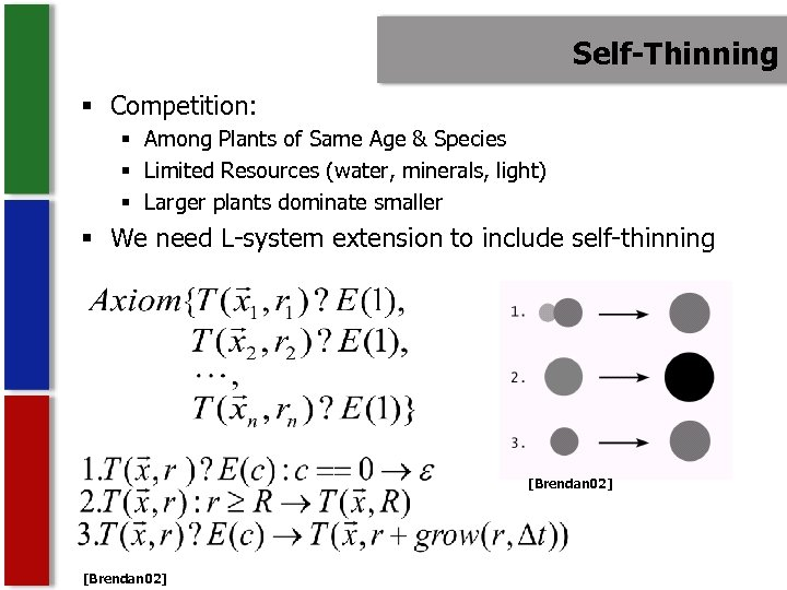 Self-Thinning § Competition: § Among Plants of Same Age & Species § Limited Resources