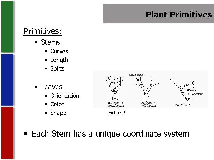 Plant Primitives: § Stems § Curves § Length § Splits § Leaves § Orientation