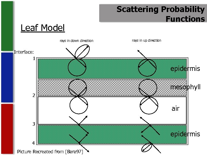 Leaf Model rays in down direction Scattering Probability Functions rays in up direction Interface: