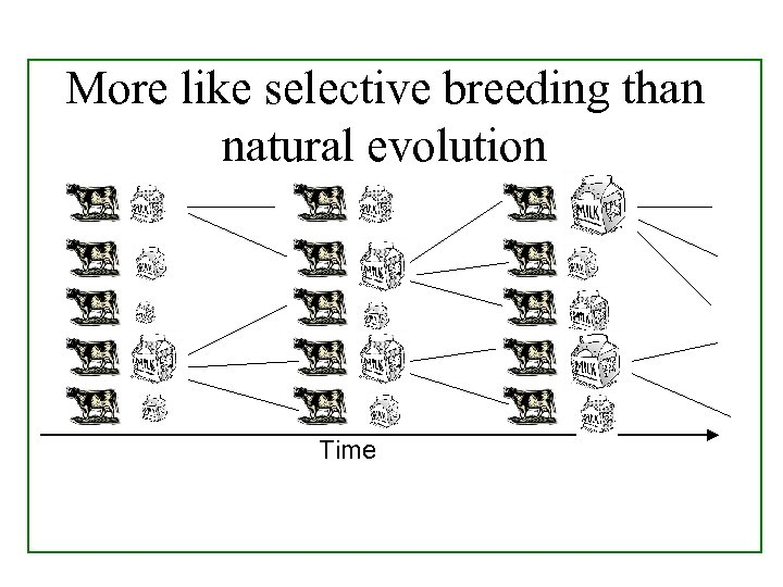 More like selective breeding than natural evolution Time