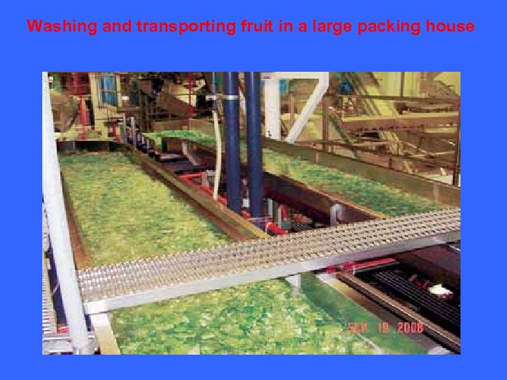 Washing and transporting fruit in a large packing house