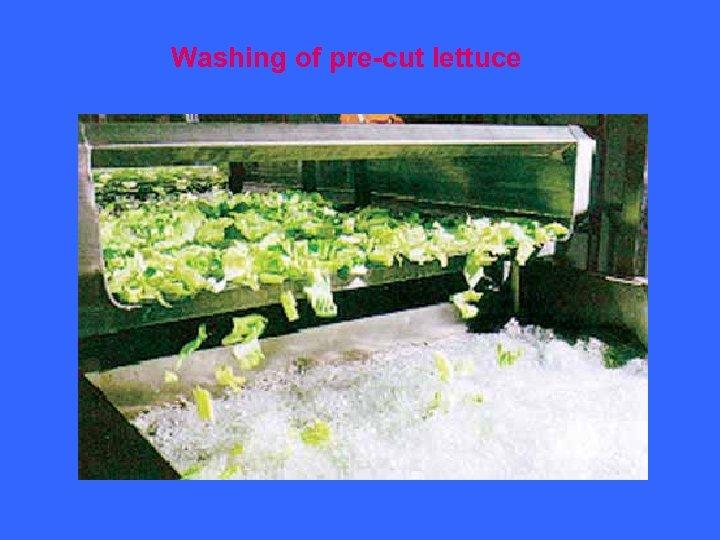 Washing of pre-cut lettuce