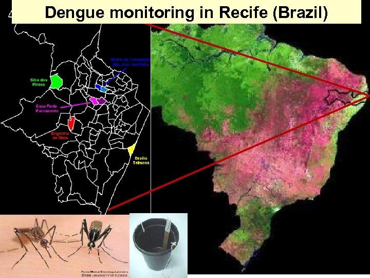 Dengue monitoring in Recife (Brazil)