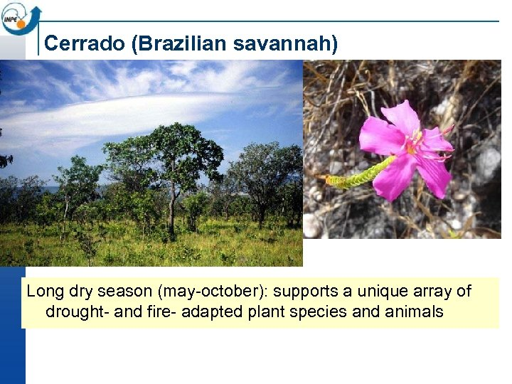 Cerrado (Brazilian savannah) Long dry season (may-october): supports a unique array of drought- and