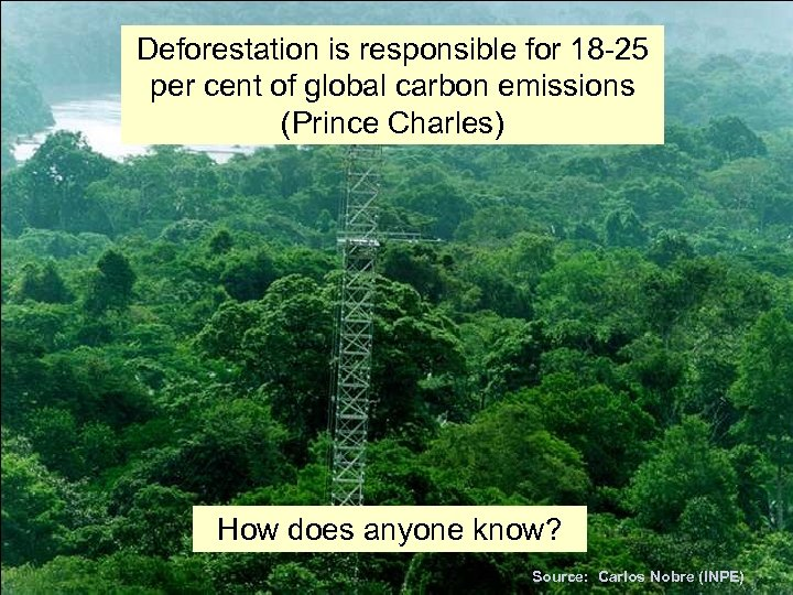 Deforestation is responsible for 18 -25 per cent of global carbon emissions (Prince Charles)