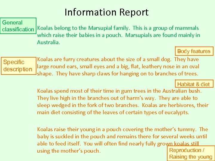Information Report General classification Koalas belong to the Marsupial family. This is a group