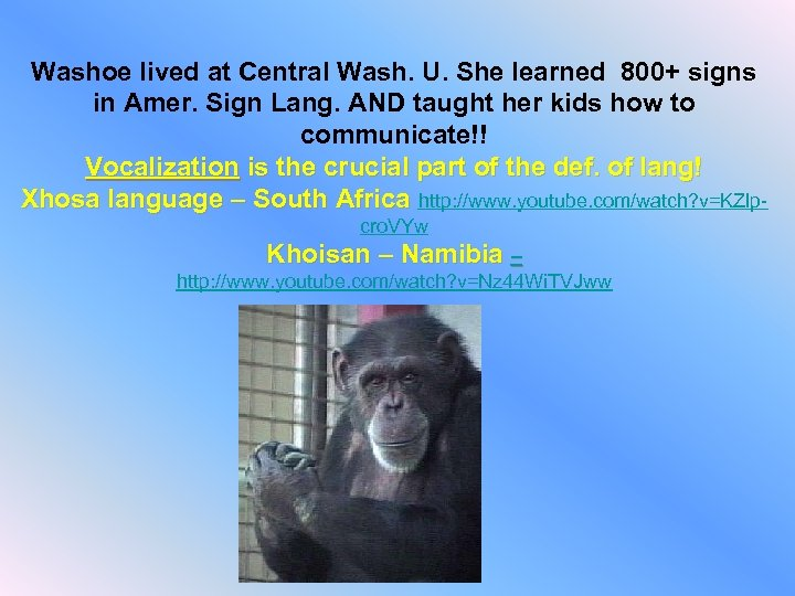 Washoe lived at Central Wash. U. She learned 800+ signs in Amer. Sign Lang.