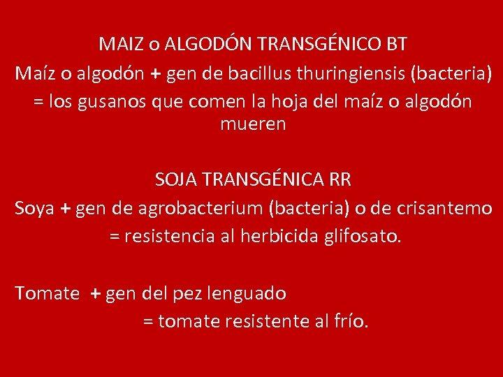 MAIZ o ALGODÓN TRANSGÉNICO BT Maíz o algodón + gen de bacillus thuringiensis (bacteria)
