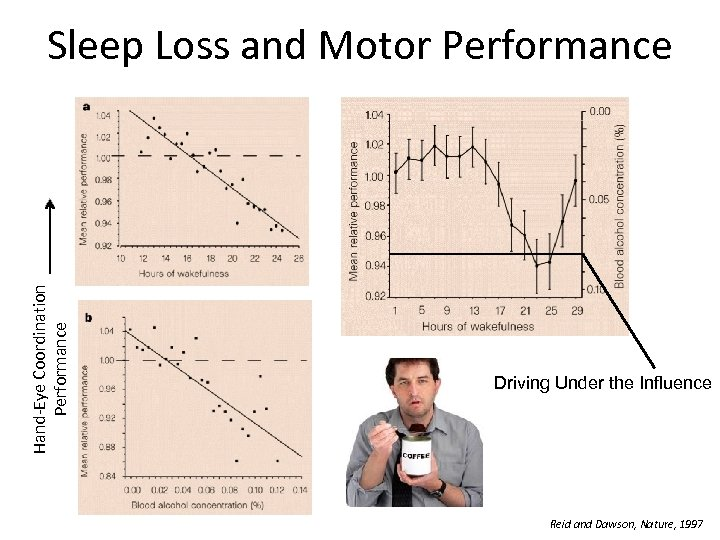 Hand-Eye Coordination Performance Sleep Loss and Motor Performance Driving Under the Influence Reid and