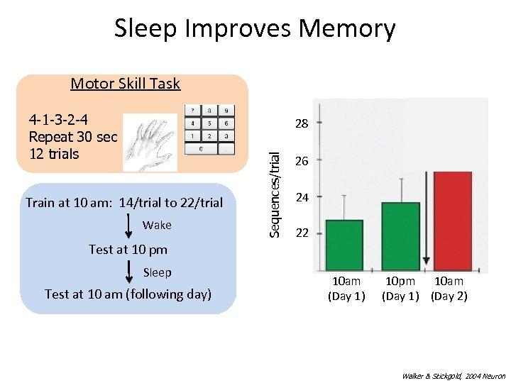 Sleep Improves Memory Motor Skill Task SLEEP 4 -1 -3 -2 -4 Repeat 30