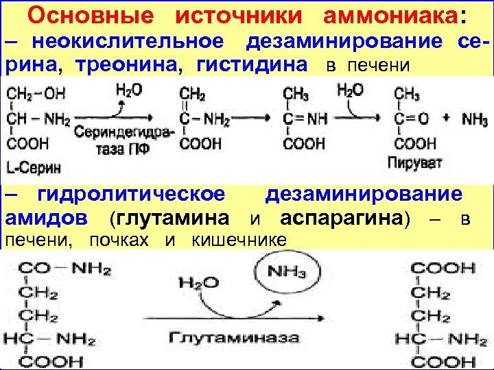 Основные источники аммониака: – неокислительное дезаминирование серина, треонина, гистидина в печени – гидролитическое дезаминирование