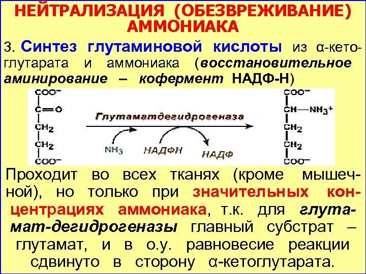 НЕЙТРАЛИЗАЦИЯ (ОБЕЗВРЕЖИВАНИЕ) АММОНИАКА 3. Синтез глутаминовой кислоты из α-кетоглутарата и аммониака (восстановительное аминирование –