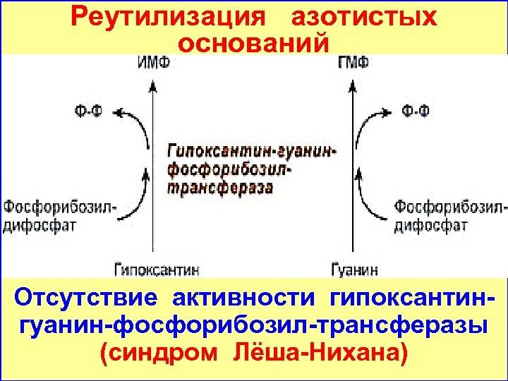 Реутилизация азотистых оснований Отсутствие активности гипоксантингуанин-фосфорибозил-трансферазы (синдром Лёша-Нихана)