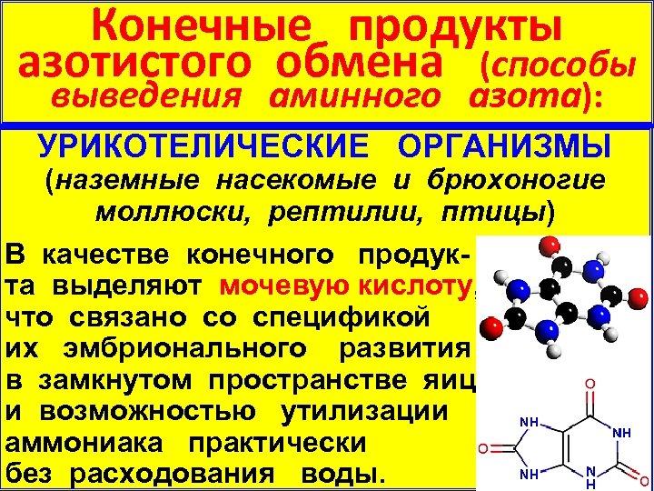 Конечные продукты азотистого обмена (способы выведения аминного азота): УРИКОТЕЛИЧЕСКИЕ ОРГАНИЗМЫ (наземные насекомые и брюхоногие