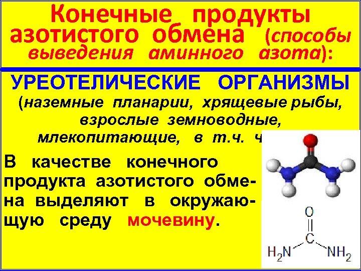 Конечные продукты азотистого обмена (способы выведения аминного азота): УРЕОТЕЛИЧЕСКИЕ ОРГАНИЗМЫ (наземные планарии, хрящевые рыбы,