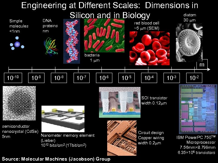 Engineering at Different Scales: Dimensions in diatom Silicon and in Biology 30 m DNA
