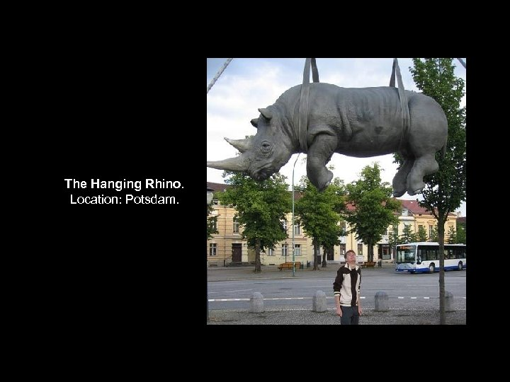 The Hanging Rhino. Location: Potsdam.