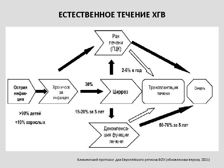 ЕСТЕСТВЕННОЕ ТЕЧЕНИЕ ХГВ Клинический протокол для Европейского региона ВОЗ (обновленная версия, 2011)