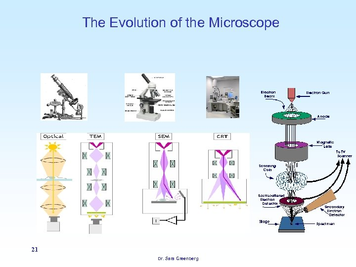 The Evolution of the Microscope 21 Dr. Sara Greenberg