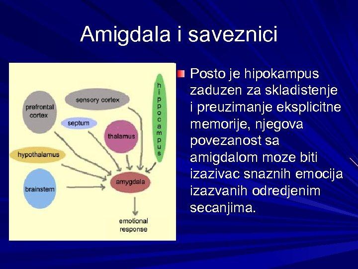 Amigdala i saveznici Posto je hipokampus zaduzen za skladistenje i preuzimanje eksplicitne memorije, njegova