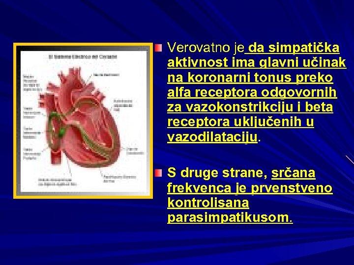 Verovatno je da simpatička aktivnost ima glavni učinak na koronarni tonus preko alfa receptora