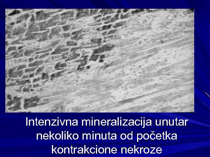 Intenzivna mineralizacija unutar nekoliko minuta od početka kontrakcione nekroze
