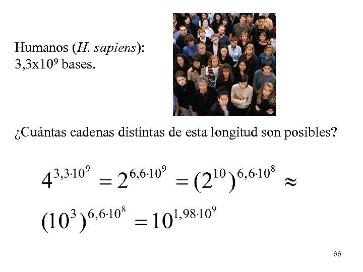 Humanos (H. sapiens): 3, 3 x 109 bases. ¿Cuántas cadenas distintas de esta longitud