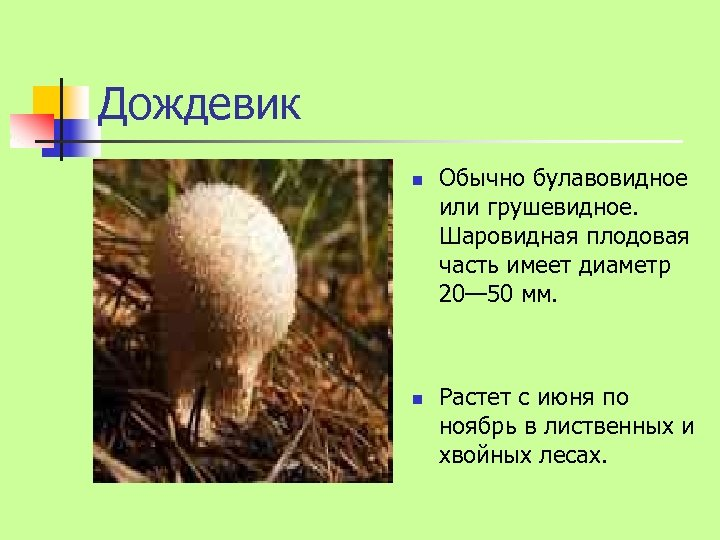 Дождевик n n Обычно булавовидное или грушевидное. Шаровидная плодовая часть имеет диаметр 20— 50