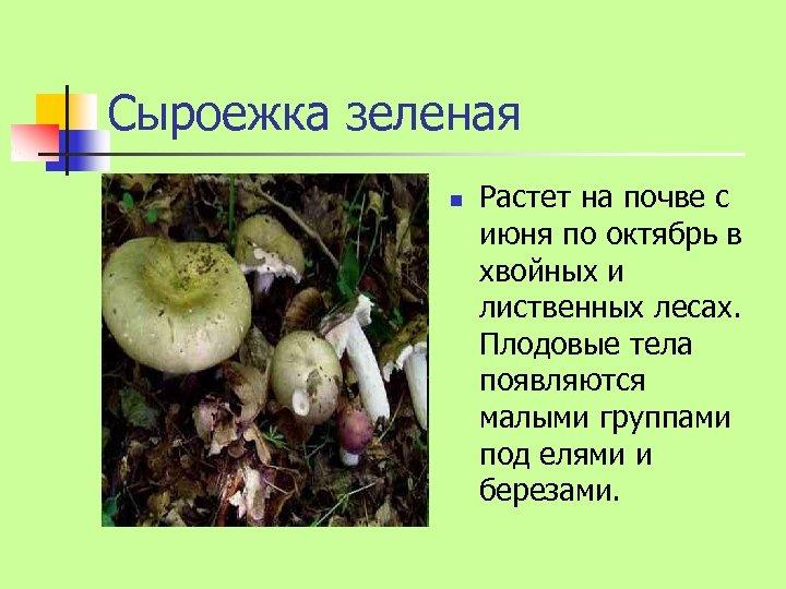 Сыроежка зеленая n Растет на почве с июня по октябрь в хвойных и лиственных