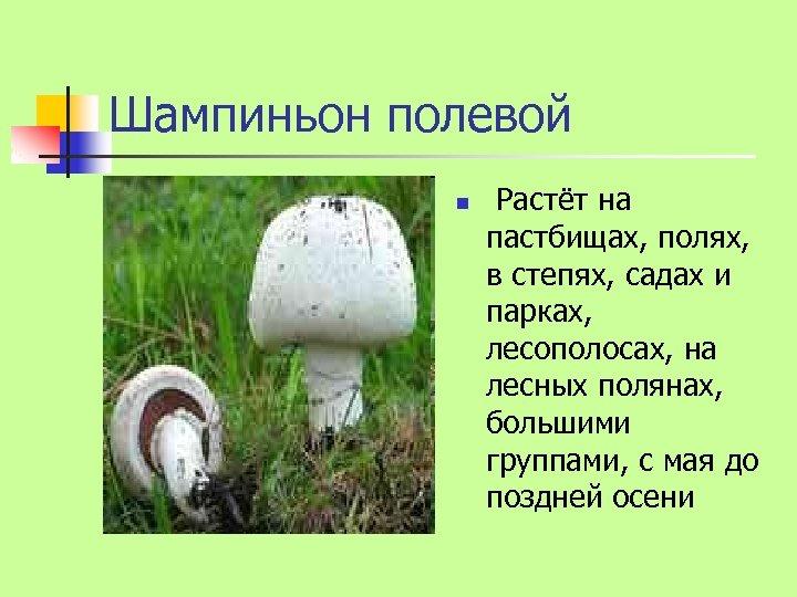 Шампиньон полевой n Растёт на пастбищах, полях, в степях, садах и парках, лесополосах, на